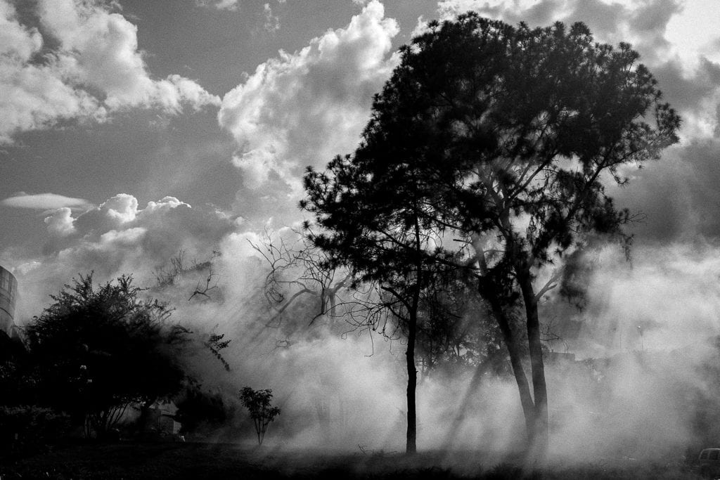 A tree is seen with tear gas in Caracas, on July 6, 2017. From the series Blurred in Despair.