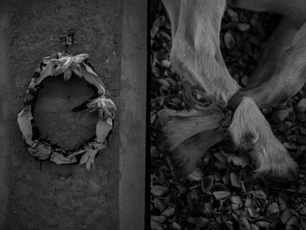 [Left] A mortuary ornament in a cemetery in the Guajira desert, close to the Venezuela-Colombia border. [Right] the legs of a young goat that was immobilized before being killed. Death is always present in Venezuela, where around 28,000 people were murdered in 2016, according to the Venezuelan Observatory of Violence.
